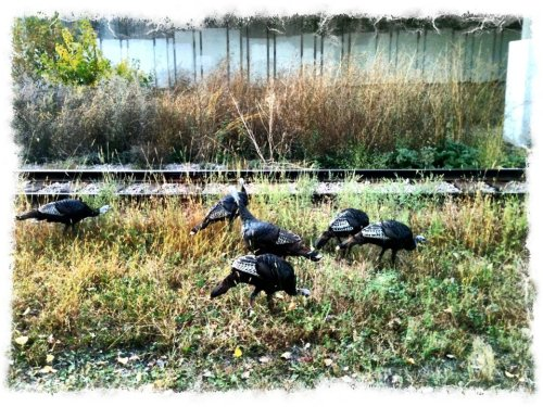 Turkeys on Cedar Lake Trail. (Photo by Sarah McKenzie)