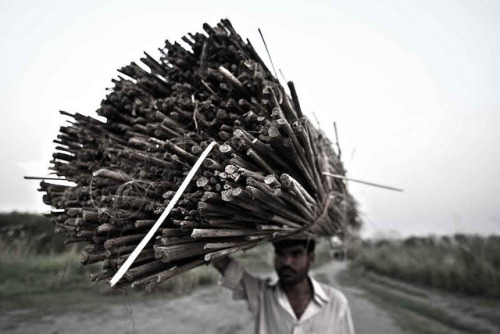 pettyinfo:  Dry stick …[Front Page Explored # 18 on 02 oct 2011] by *HamimCHOWDHURY* on Flickr.