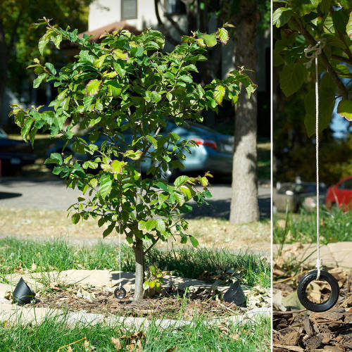 Tiny tire-swing for a little bitty tree (via Tiny tire-swing for a little bitty tree – Boing Boing)