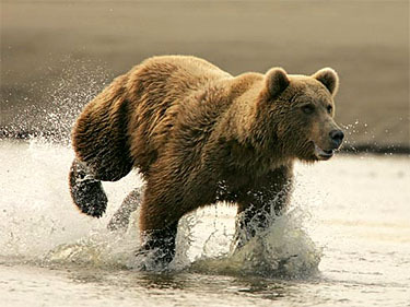 mtbears:  Run, Run, Keep On Running