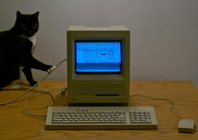 cat and Apple Macintosh SE computer (photo by catasterist)