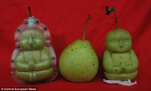 bohemia-and-beyond:  Oh. And I want to grow pears like that.