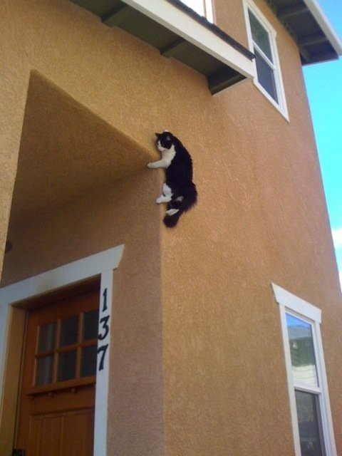 Spider Cat! Spider Cat! Does whatever a Spider Cat does!