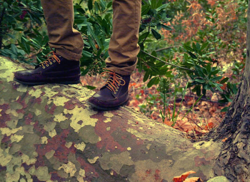 marcosblanco:  Nice log (and L.L.Bean Signature boots)