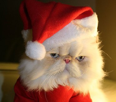 awwyeahhimmies:  getoutoftherecat:  oh cat.  Merry start of Christmas music playing in stores!