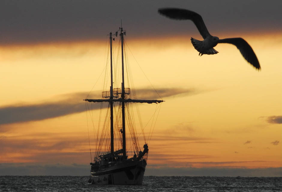 A sailing boat arrives at the sunset at Trieste harbour October 7, 2011.  The annual Barcolana regatta in the Gulf of Trieste near northern  Italy, which began in 1969 and takes place on the second Sunday of  October, is one of the largest sailing races in the world with over  2,000 participants. See more