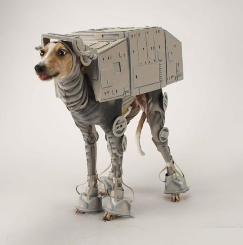 agaroux:  Ziggy NEEDS THIS. but his legs are probably too stubby…  LOL. Poor dog. That looks ridiculously uncomfortable.