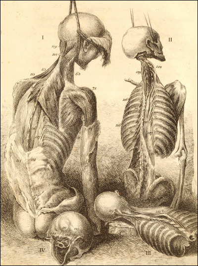 stranger-than-kindness:   Engravings of the bones, muscles, and joints, illustrating the first volume of the Anatomy of the Human Body. 2d ed. London, 1804. Etching. National Library of Medicine. John Bell(1763-1820)[anatomist; artist]