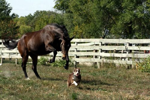 Orphan (a 3 year old filly) chasing Annie (the dog). :)