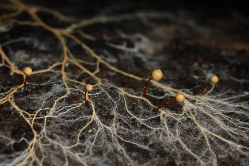 Slime mold with fungus