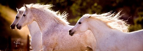 :: Om El Arab International :: Broodmares :: on We Heart It. http://weheartit.com/entry/1778383