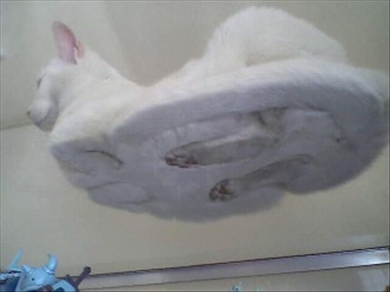 am I the only one who wondered what a cat looked like from underneath when it sits down?