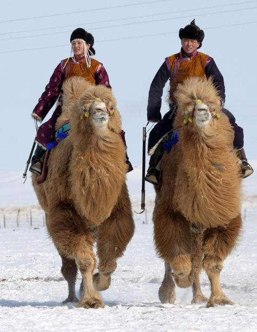 culturalcrosspollination:  Camel riders in the Gobi desert