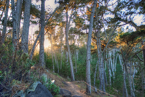 Point Lobos Trail (by Guerrewhoa)