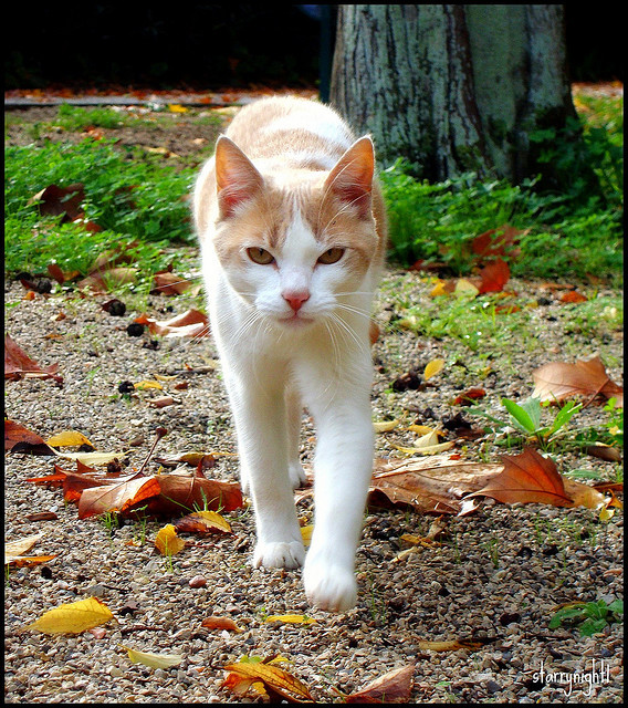 Autumn cat - Gato de Outono by * starrynight1 on Flickr.