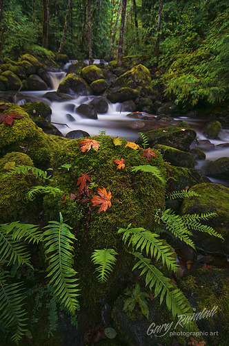 raspberrytart:  The Beginning of Autumn (by Gary Randall)