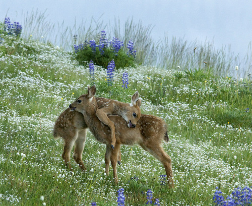 animalstalkinginallcaps:  HAVE YOU SEEN THESE FLOWERS? THERE ARE SO MANY OF THEM! AND THEY'RE BEUTERFUL. BOOTIFALL? THEY'RE REALLY PRETTY. I'M GOING TO PUNCH YOU IN THE FACE, YOU BELLIGERENT DRUNK SHITHEAD, IF YOU DO NOT TURN AROUND AND AT LEAST TRY TO HELP ME GET YOU BACK TO THE HOTEL. YOU'RE MY BEST FRIEND. I LOVE FLOWERS AND TEQUILA AND THE WAY YOUR BACK SMELLS. I'M GOING TO BURY YOU, AND THEN YOU CAN BECOME FLOWERS. I WOULD BE PRETTY YELLOW ONES. … I HATE SO MUCH YOU RIGHT NOW.