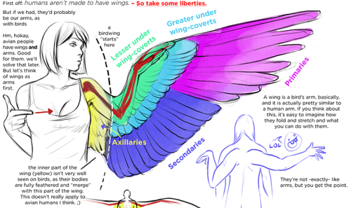 turntechlongbottom:  drawing wings on humanoids tutorial seriously the best goddamn tutorial i've EVER FOUND goddamn thought maybe my good omens bros would appreciate it? THE FULL TUTORIAL IS TOO BIG FOR TUMBLR SO CLICK HERE TO SEE IT