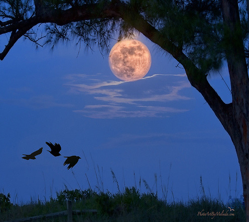 lori-rocks: Twilight Moon  by melepix