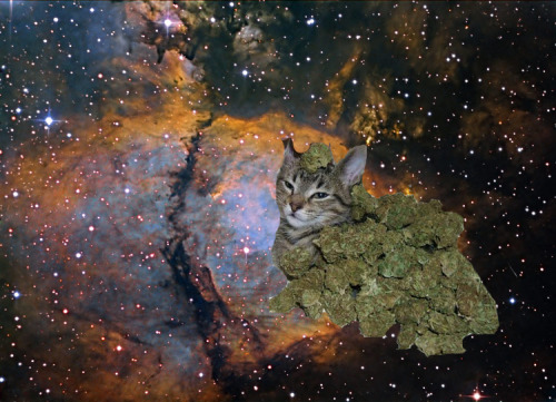 dreadloctopus:  the universe as far as i'm concerned   KUSHKITTEN
