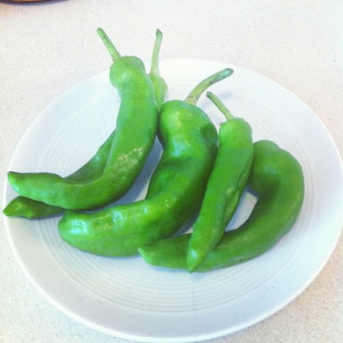 Decent green chile harvest. Now just need to decide what to cook with 'em. (Taken with Instagram at 37 Caswell)