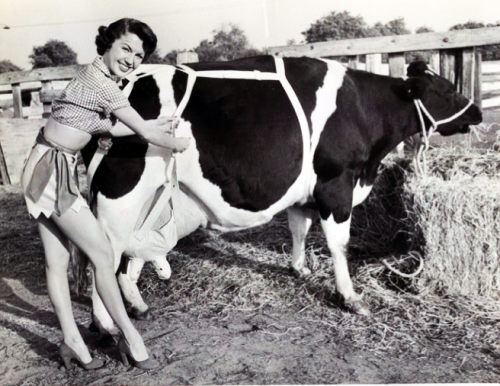 "vintagegal:  ""A brassiere for cows is modeled by Elise."" 1949"