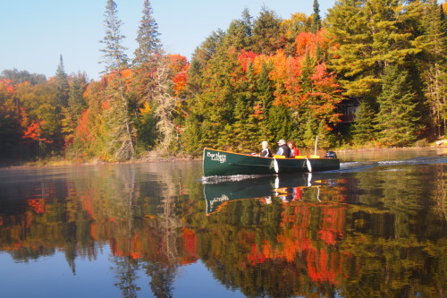 A little fall foilage from Cache Lake, Algonquin Park.