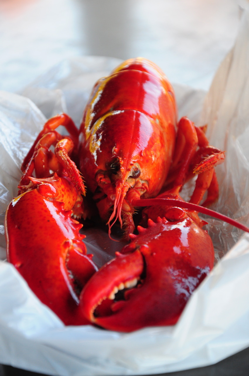 Lobster from Gaspesie