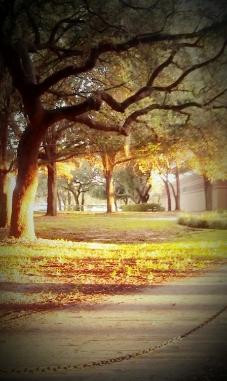 kinseybee:  My campus is prettier than your campus.