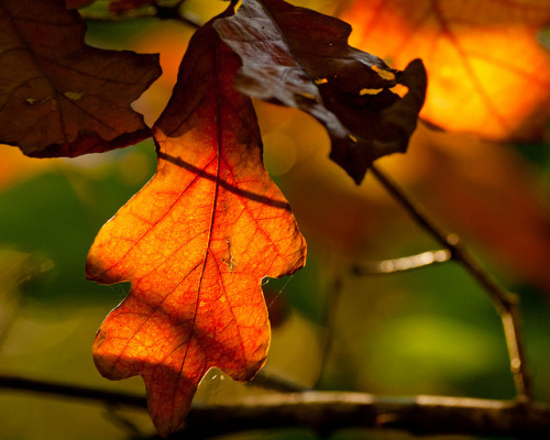 The Autumn Leaves are Turning to the Color of Rust by Peter E. Lee on Flickr.
