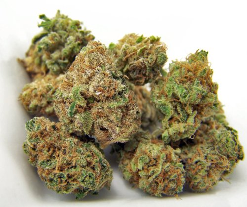 blowinonmedicinal:  Qrazy train Train Wreck x Trinity x Purple Urkle x Space Queen