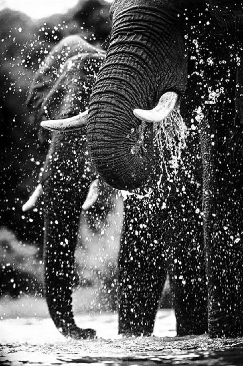 Elephants drink water in Kapama Game Reserve, Limpopo Province, South Africa Picture: Heinrich van den Berg/Gallo Images/Barcroft Media