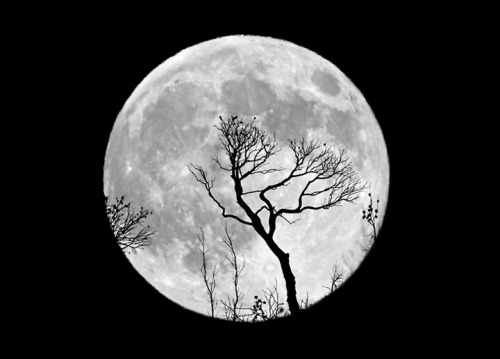 llbwwb:  Moon Dance :)  (via Inspiration Dose #9: Moon Photography | Smashing Picture)