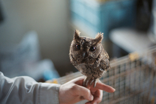 I love me some owls:))