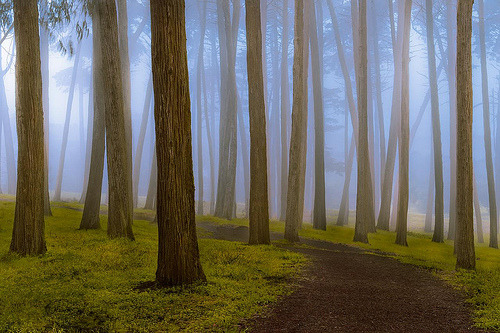 jorrty:  Fog Lines (by hug n angels)