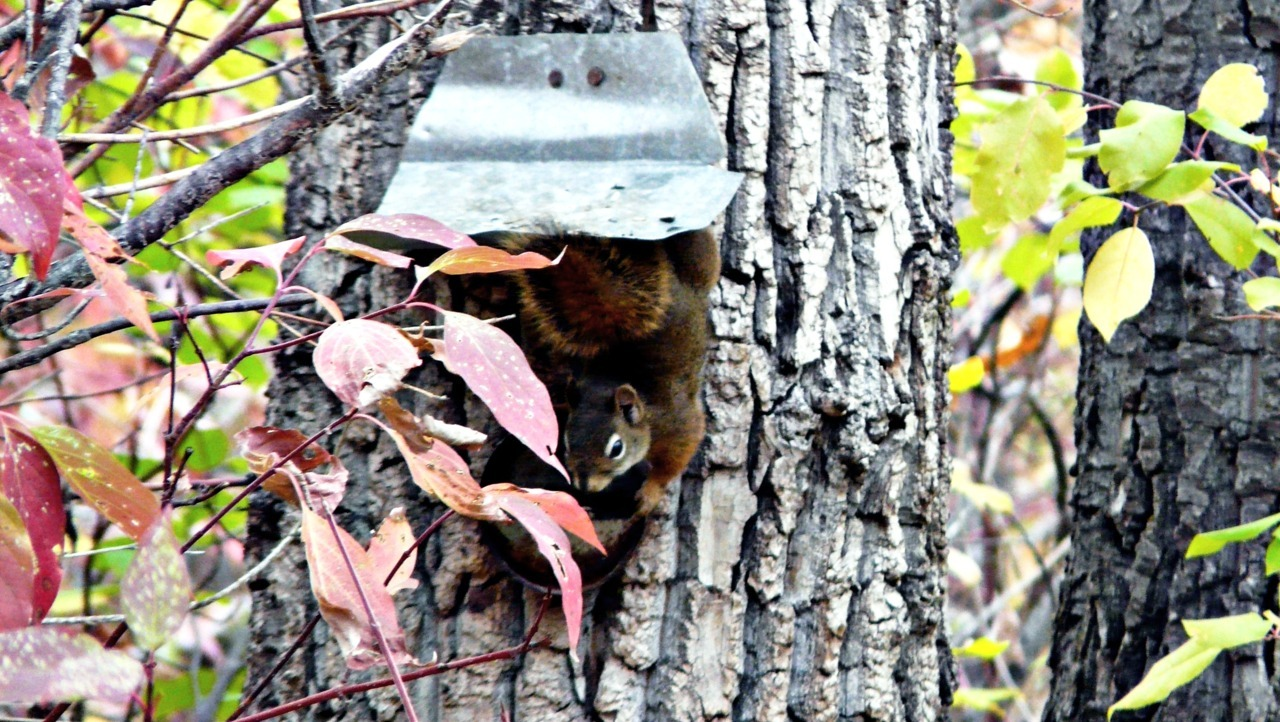- Squirrely squirrel -  Morning Tuesday - I am experiencing thanksgiving withdrawal. I need some mashed potatoes, stat! Luckily, I have a bit of stuffing left. otherwise I'd be a complete wreck.