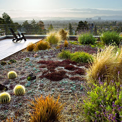 urbangreens:  Drought-tolerant rooftop garden - Sunset.com