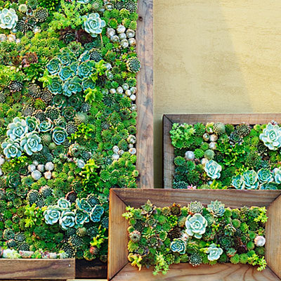 urbangreens:  Succulent vertical garden frames  Need to start keeping things like this in mind for the new house
