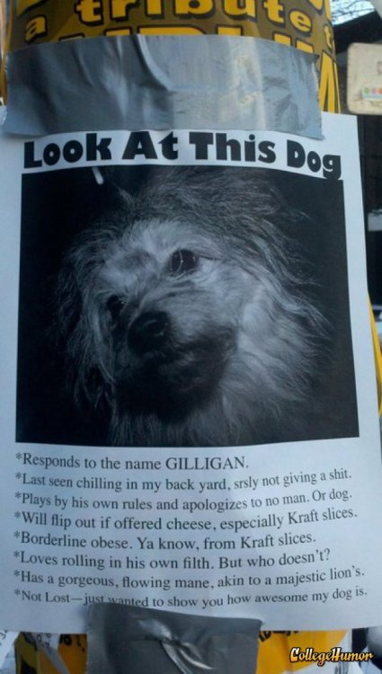 collegehumor:  Dog Owner Really Loves His Dog The dog posted a similar sign about his owner.