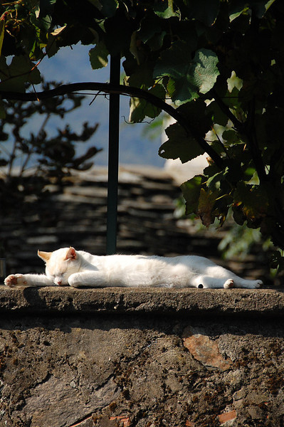 thetravelbelles:  Cat napping on wall in the sun, Vogogna, Italy by @gomarwrites