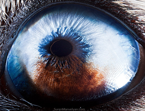 Man, Suren Manveylan's series of Eye macro photos is amazing. Really amazing. Check out his site for the full set.   Thanks to PetaPixel for the find!