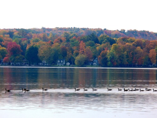 Autumn on #ChautauquaLake Photo: #LongPointStatePark   October 11, 2011   Karen Glosser   @I_Love_NY