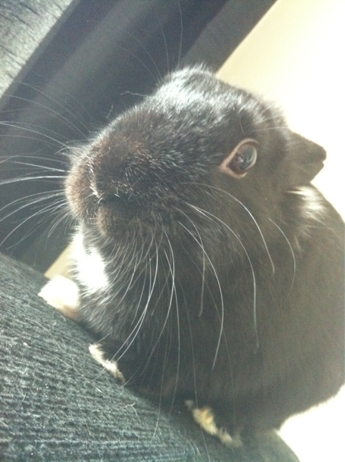 My adorable rabbit Reggie. Get well soon so you can come back home where you belong xxx