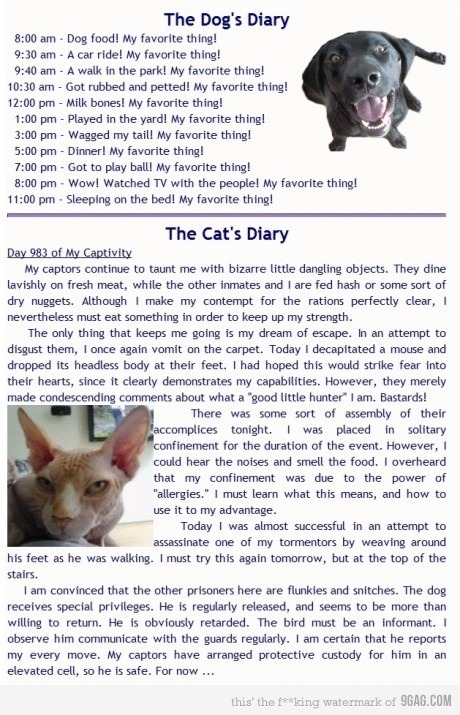 9gag:  The Dog and Cat's Diary