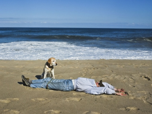 Another Dan Pearlman snapshot, this time of a dog on Cape Cod waiting for its master to wake the hell up and throw something.