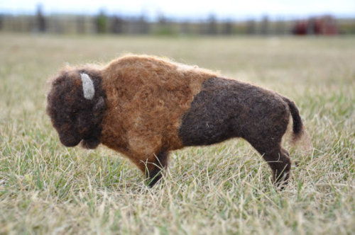 A needle felted Bison fresh from the Dakota Territory. He is made entirely from wool that comes from our sheep that graze the prairie grasses of North Dakota. He was sculpted while looking at pictures of live buffalo. He is very firmly felted with Romney wool. He measures 9 inches long and 5 1/2 inches tall. He has glass eyes.