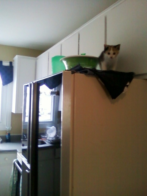 get down from there cat. how did you get up there anyway your legs are like 3 inches long.