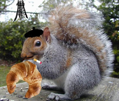 here is a french squirrel eating a croissant.