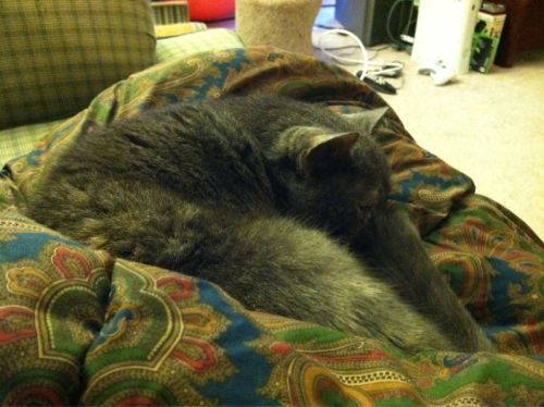 "Gray Cat is fully embracing ""Work from Home"" Friday."