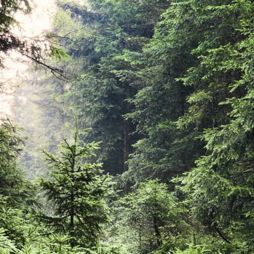 maybegreen:  Forest Photography by d o l f i on Flickr.